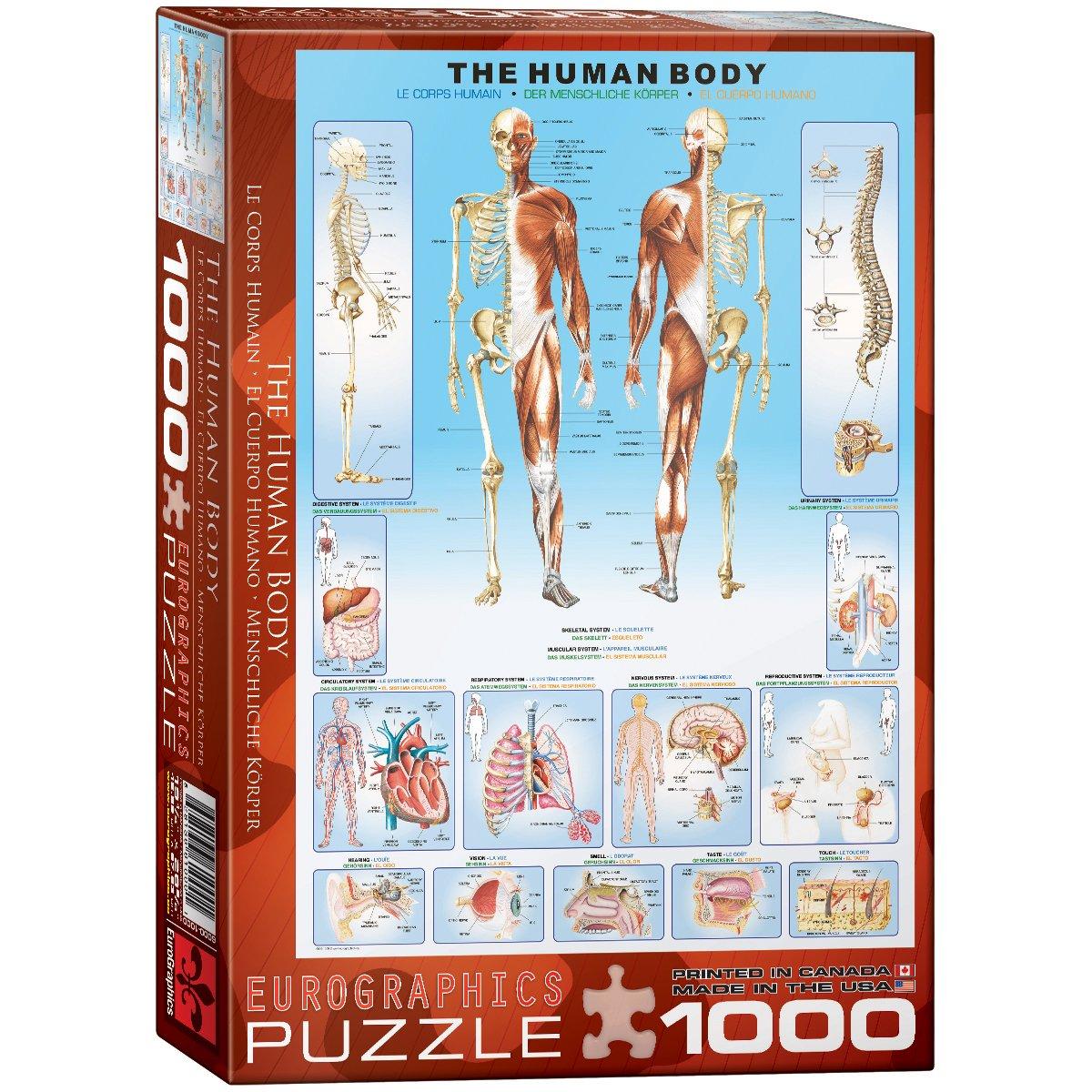 EuroGraphics Der Menschliche Körper - 1000 Teile Puzzle: Amazon.de ...