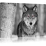 belle loup vigilant noir / blanc Taille: 100x70 sur toile, énorme XXL Photos complètement encadrée avec civière, art impression sur murale avec cadre, moins cher que la peinture ou la peinture à l'huile, aucune affiche ou un poster