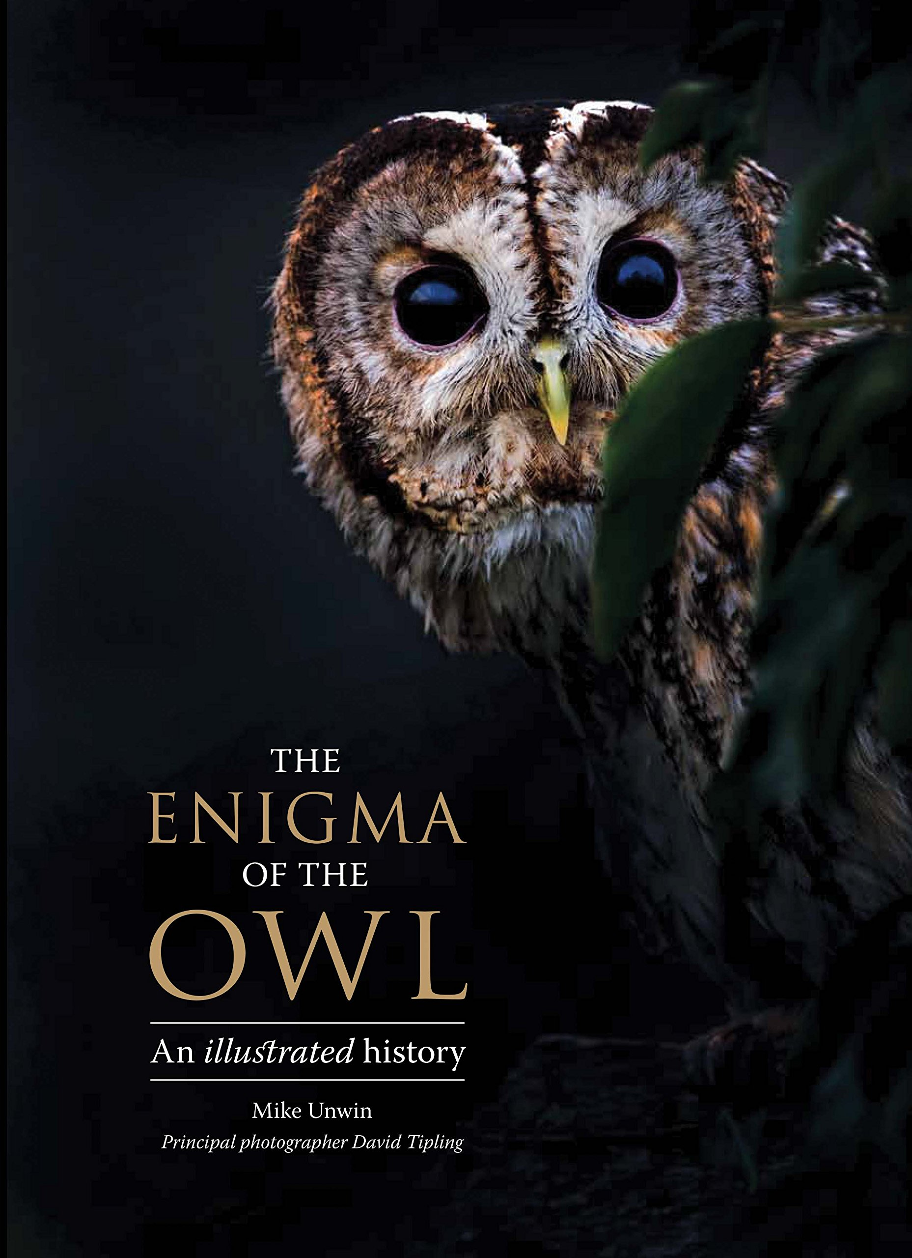 The Enigma of the Owl: An Illustrated Natural History
