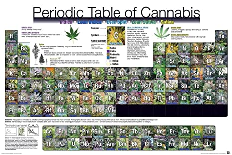 PERIODIC TABLE OF WEED POT MARIJUANA CHART LIST  POSTER HD Printed