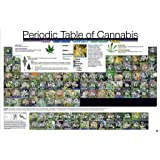 """Periodic Table Of Cannabis (36""""x24"""")"""