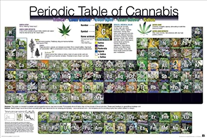 Amazon 24x36 Periodic Table Of Cannabis College Poster