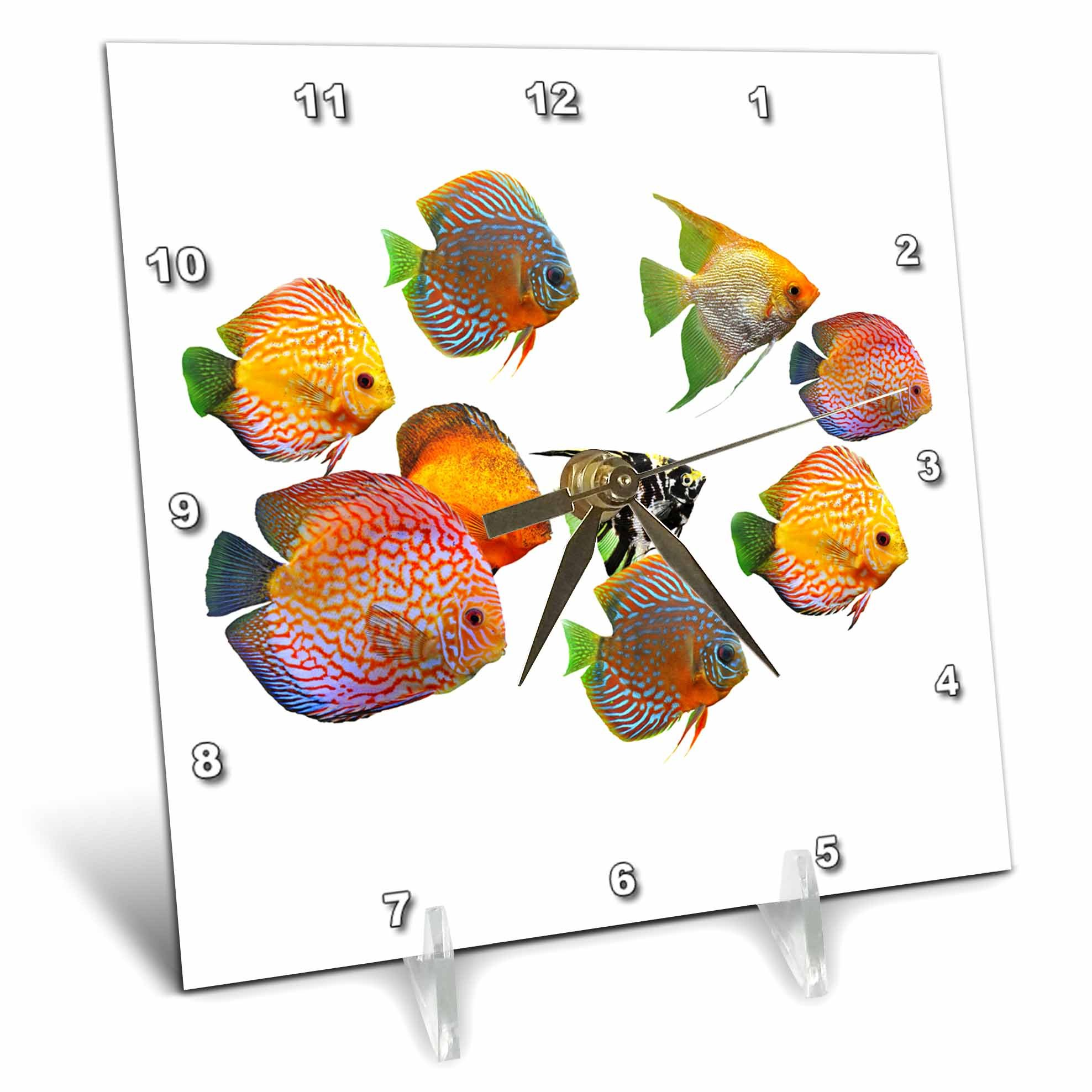 3dRose Sven Herkenrath Animal - A Swarm Colorful Discus Fishes on Empty White Background - 6x6 Desk Clock (dc_280387_1)