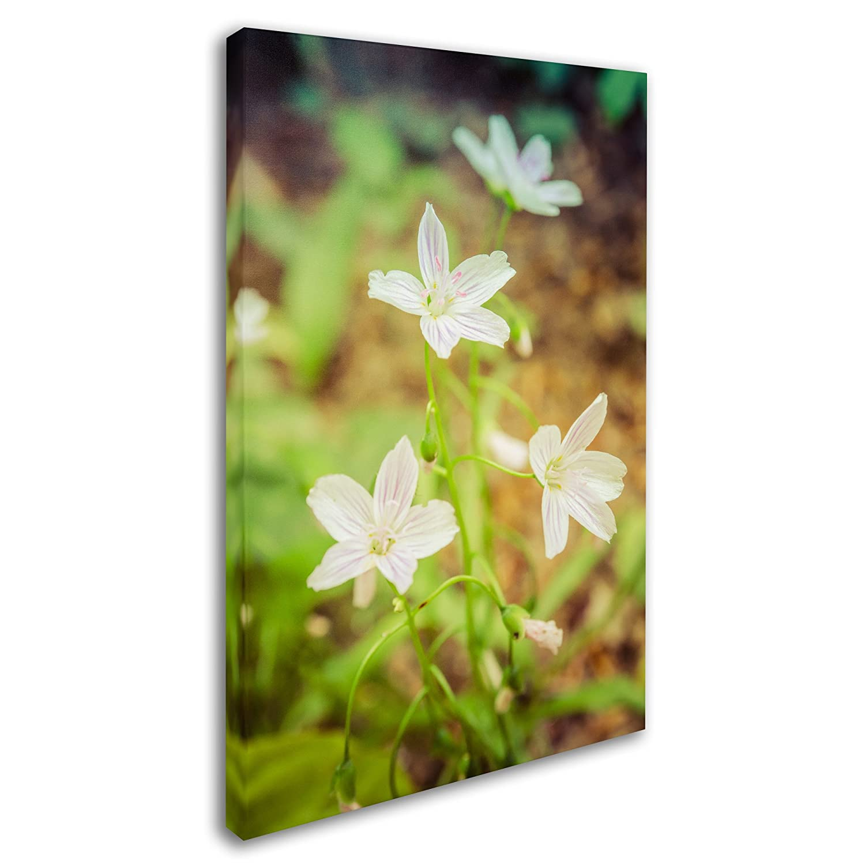 Amazon.com: Trademark Fine Art Tranquil Carolina Spring Beauty by ...