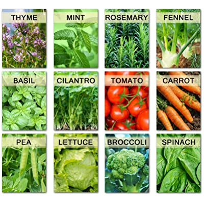 Vegetable & Herb Garden Seeds Kit 12 Varieties Non GMO Heirloom for Planting Outdoor or Indoor (12 Varieties) : Garden & Outdoor