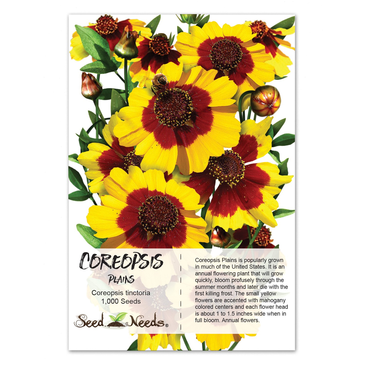 Amazon Package Of 1 000 Seeds Coreopsis Plains Coreopsis