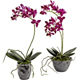 Nearly Natural 4993-S2 Mini Phal with Metallic Vase, Set of 2