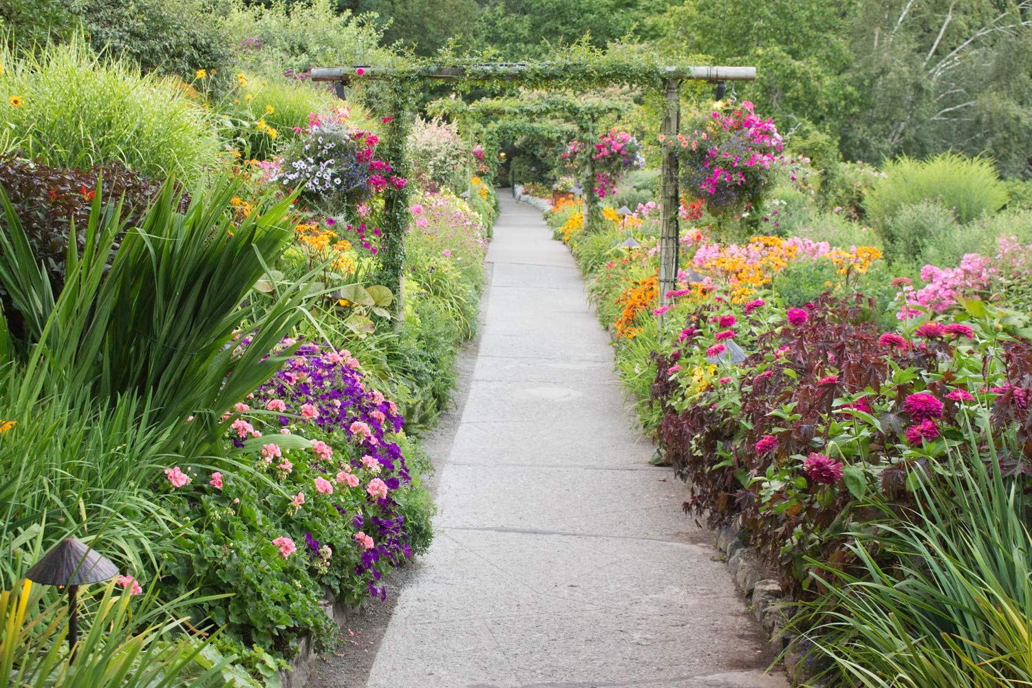 Path through Lush Garden Wall Art Unframed Colorful Flowers Butchart Gardens Picture Floral Home Decor Arches Hanging Basket Green Pink Orange Purple