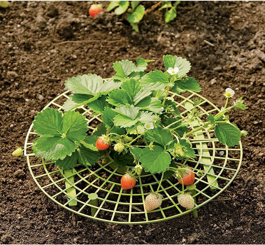 PovKeever Soporte para Plantas de Fresa, 3 Unidades, Protección ...