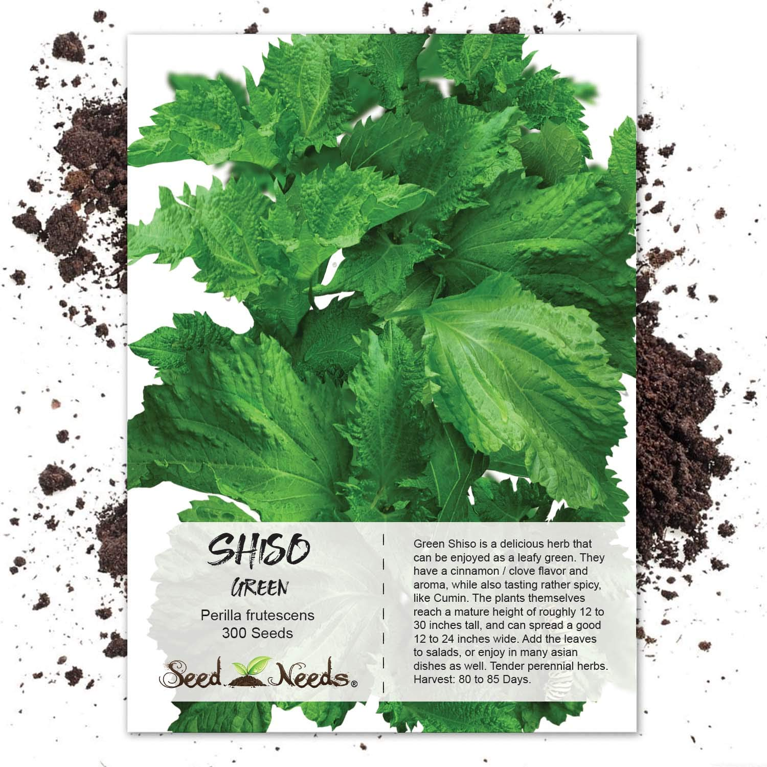 100 Seeds, Green Shiso (Perilla frutescens) Seeds By Seed Needs