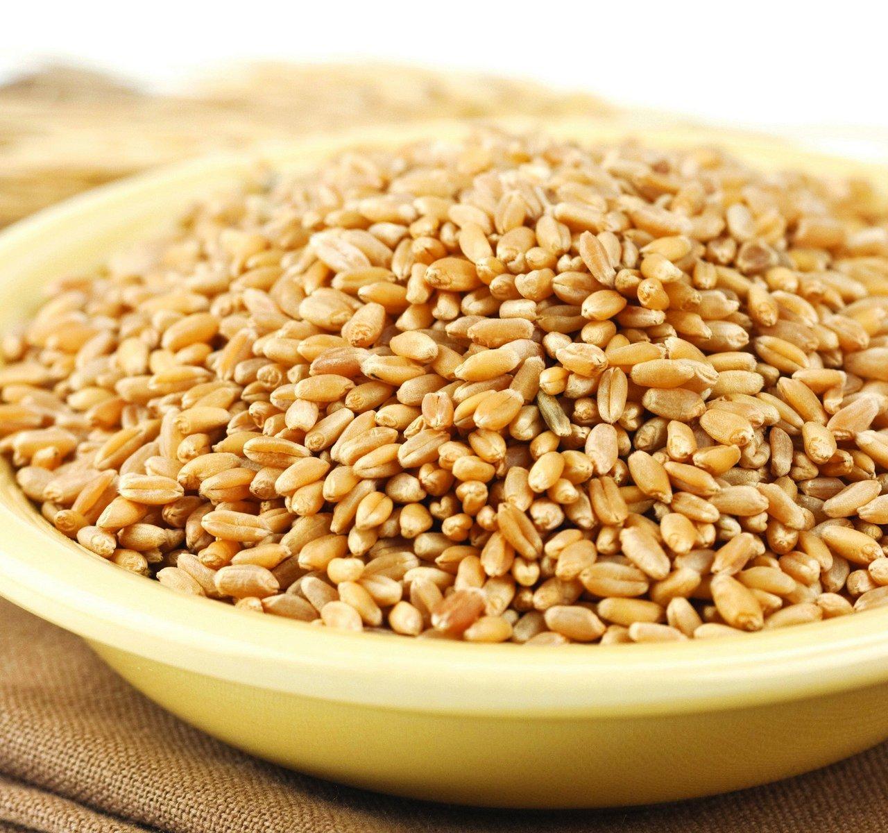 Wheat Montana Prairie Gold Hard White Spring Wheat Berries, 25 Lb. Bag