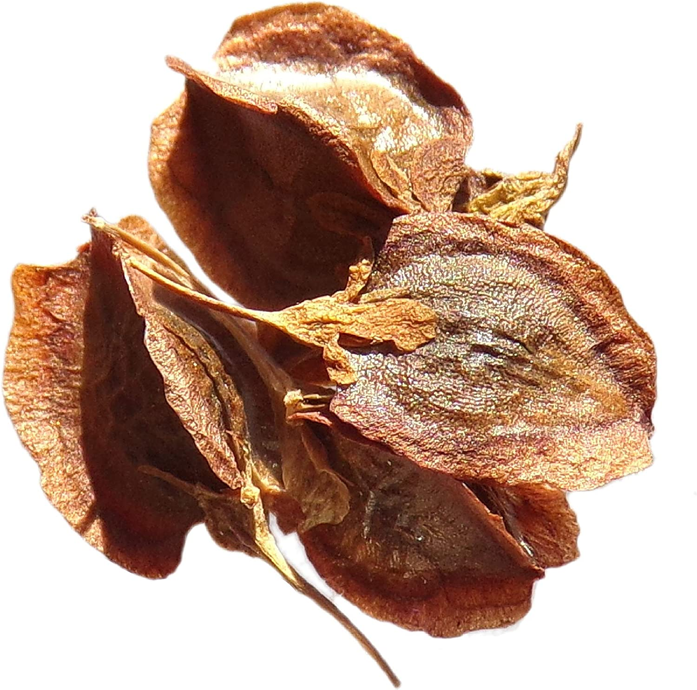 Victoria ruibarbo, Rheum semillas-9-Rhubarb: Amazon.es: Jardín