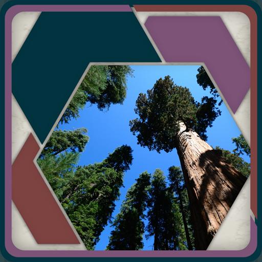 HexSaw - Redwoods (Trees Greenery)