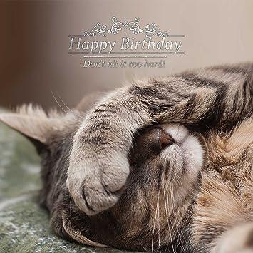 magnet steel happy birthday cat greetings card amazon co uk pet