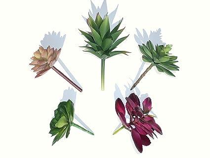 amazon com set of 5 different succulents artificial cactus plants