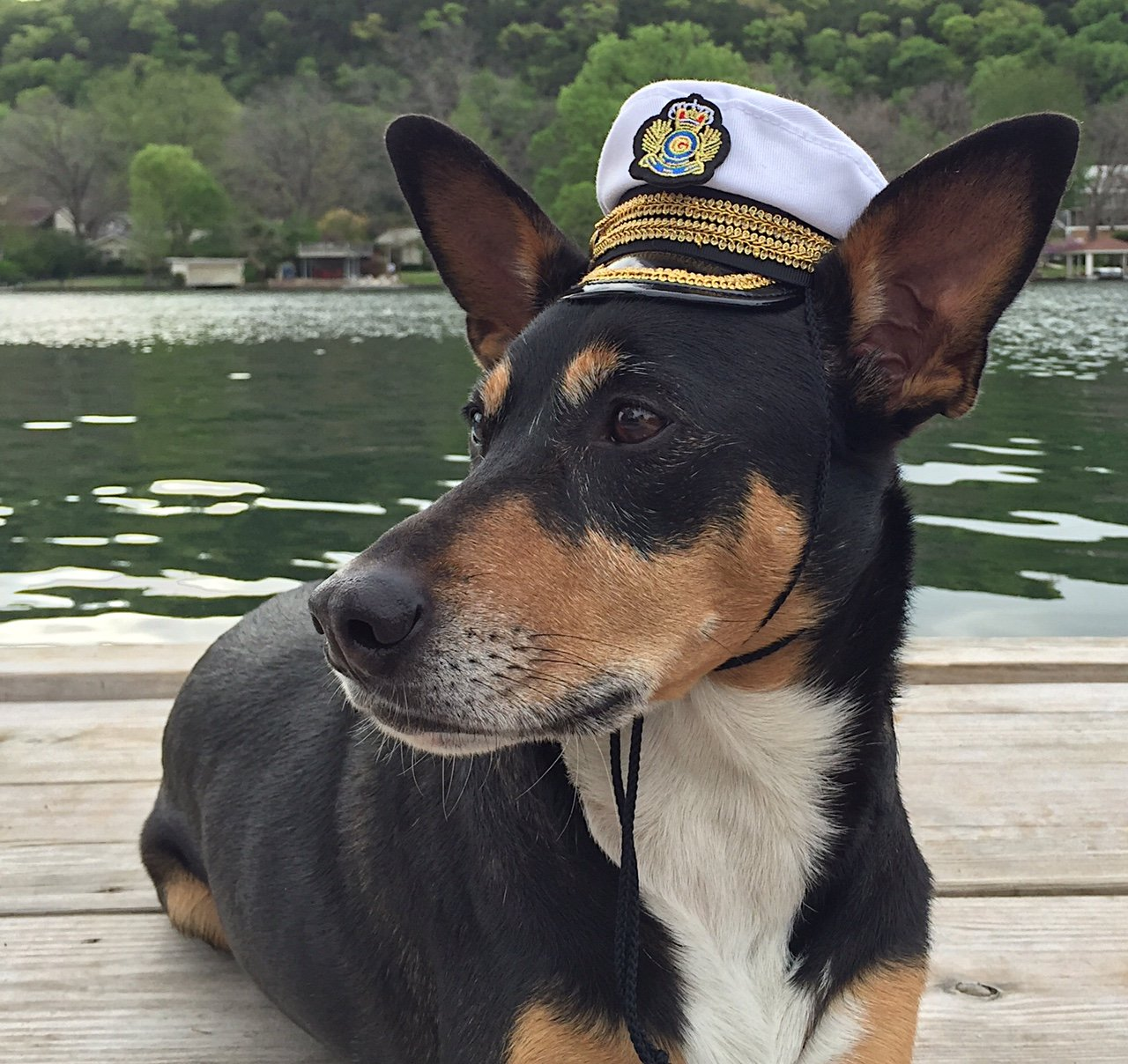 Pampered Whiskers Commanding Officer naval hat for medium sized dogs