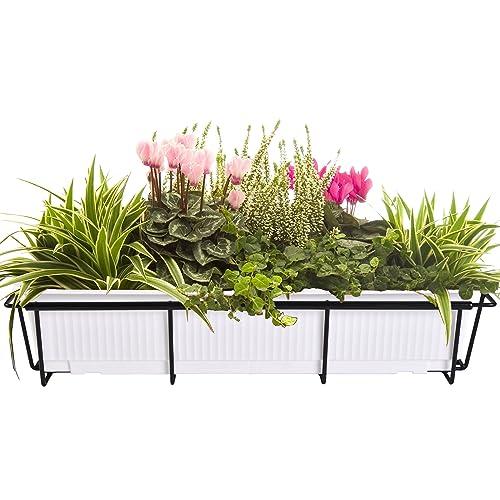 Plant Box Amazon Com