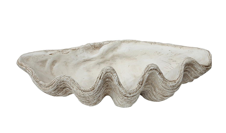 Creative Co-op óxido de Magnesio decoración de concha marina: Amazon.es: Hogar