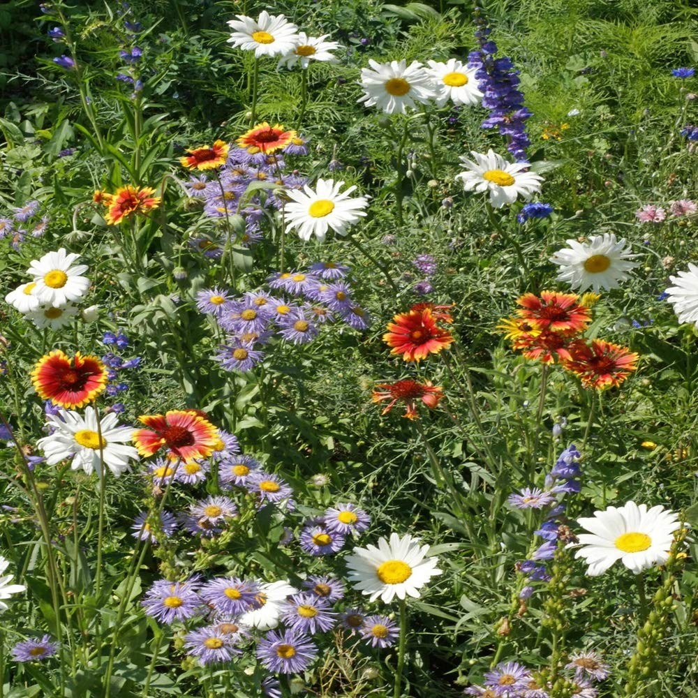 Outsidepride Mountain Wildflower Seed Mix - 1 LB