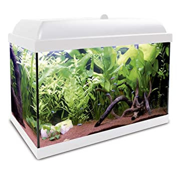 ICA KHA25B Kit Hydra 25 para Agua Dulce: Amazon.es: Productos para mascotas