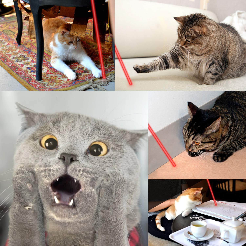 Xpassion Juguetes de Gatos, Gato Captura Juguetes de Entrenamiento Incluyendo Bateria(2 Unidades): Amazon.es: Productos para mascotas
