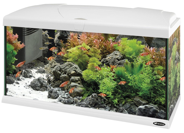 Feplast 65018011W1 Acuario de Vidrio Capri 80, Dotado con Filtro, Calentador y Lámpara 80 x 31.5 x 46.5 Cm - 100 L Blanco: Amazon.es: Productos para ...