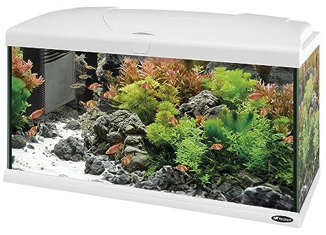 Feplast 65018011W1 Acuario de Vidrio Capri 80, Dotado con Filtro, Calentador y Lámpara 80