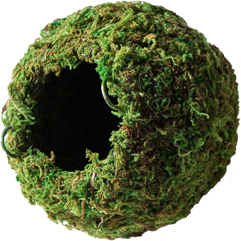 "Galápagos (05346) Mossy Cave Hide, 4"", Green"