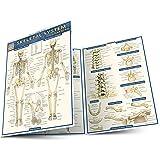 Skeletal System: Advanced