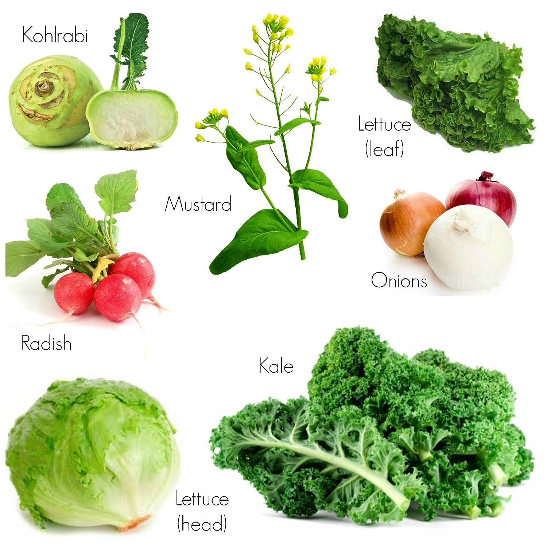 Best Vegetable Seeds Combo Knol Khol Rabi Radish Red Round