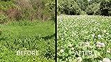 Whitetail Institute Slay Herbacide 4oz Food Plot