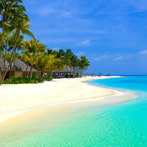 Paradise Live Wallpapers (Beach Garden Palm Flower)