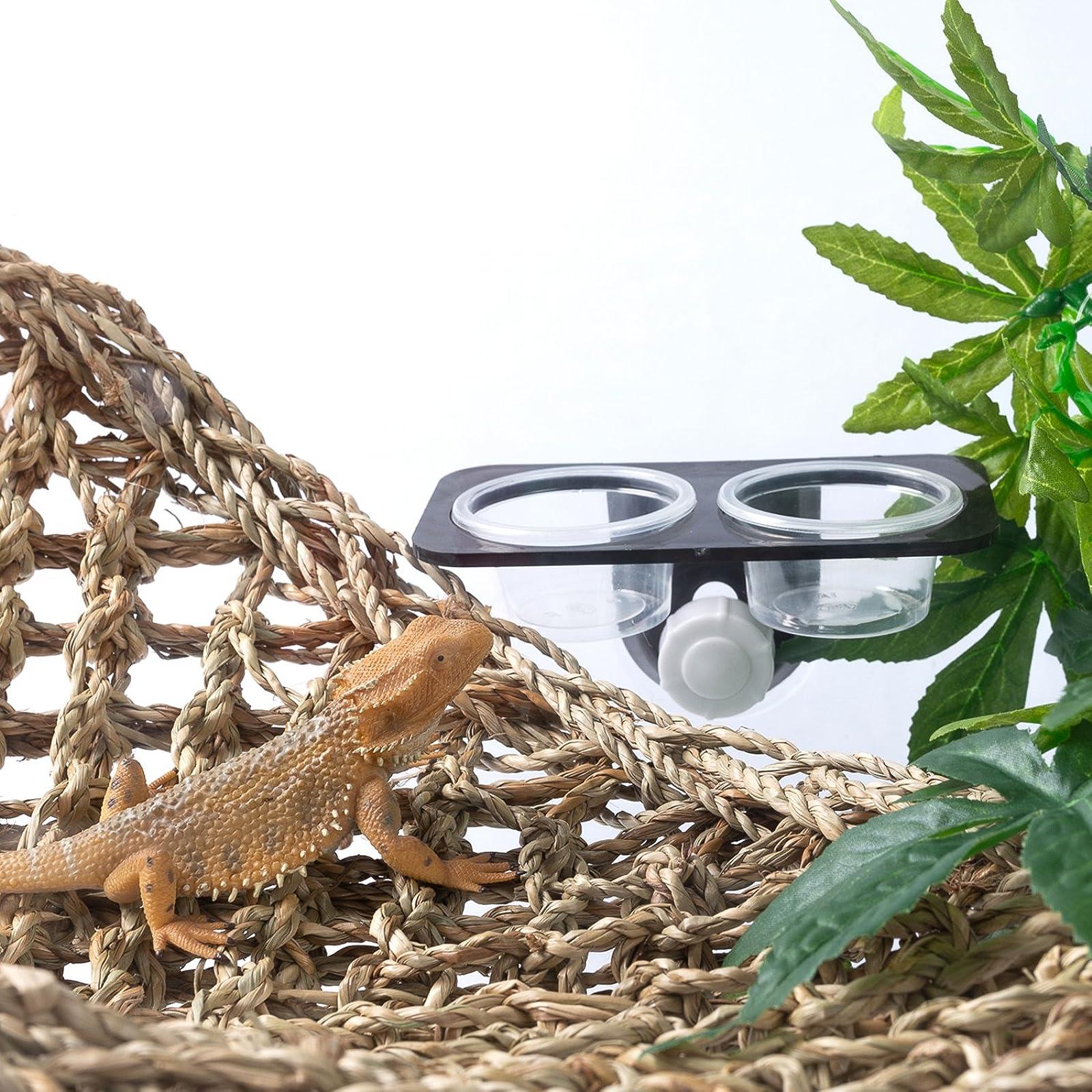 SLSON Gecko Feeder Ledge Acrylic Suction Cup - 1