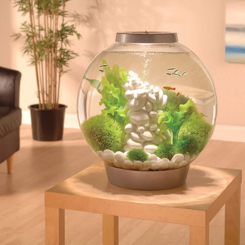 Amazon.com : biOrb CLASSIC 15 Aquarium with LED Light - 4 Gallon, Black : Aquarium Starter Kits : Pet Supplies