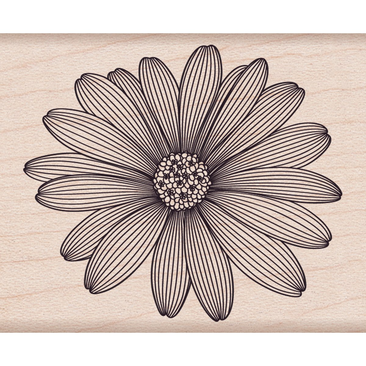 Hero Arts Etched Daisy Woodblock Rubber Stamp Inc. F5741