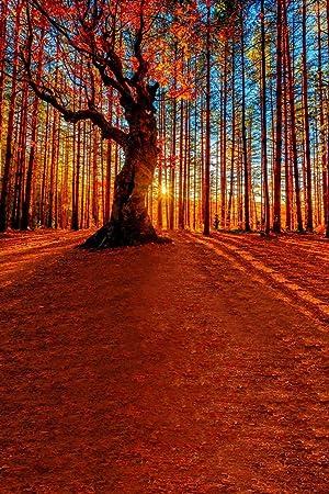 A.Monamour Llanura Naranja Rojo Árboles Bosque Tierra Campo Paisaje Paisaje Foto Fondos Estudio Estudio 5X7Ft: Amazon.es: Electrónica
