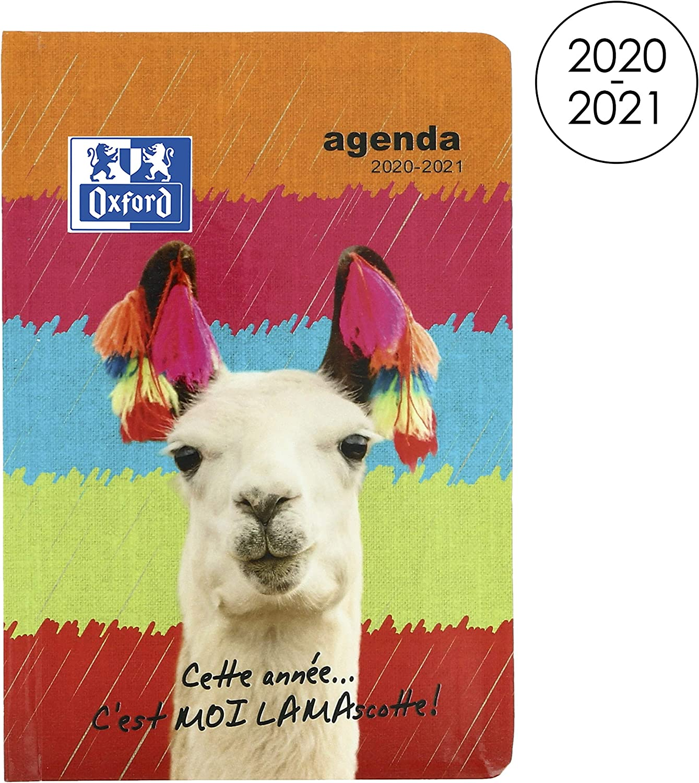 Oxford Funny Pets - Agenda escolar diaria 2019-2020, 1 día, 352 páginas, 12 x 18 cm, diseño de gato blanco: Amazon.es: Oficina y papelería