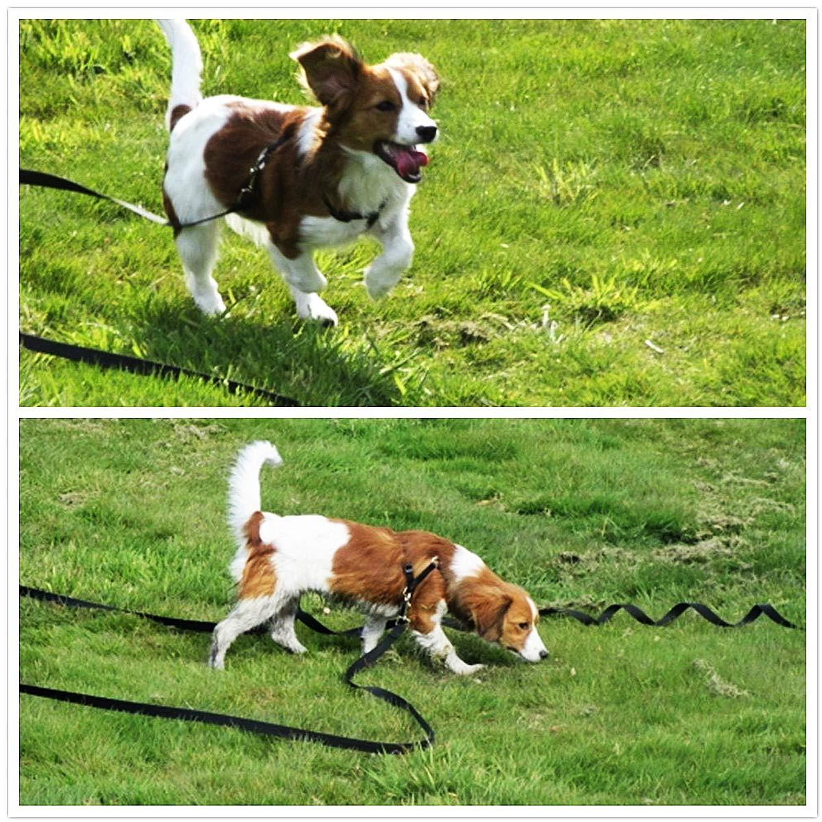 Musonic 50ft 65ft 100ft Black Extra Long Line Training Dog Leash (50 Feet)