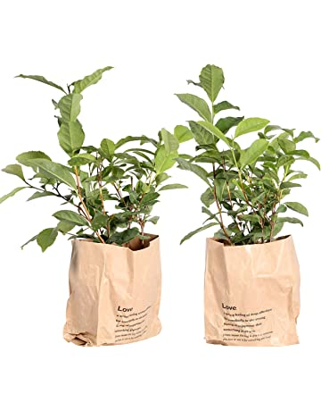 Paper Bag España Plantas Amazon