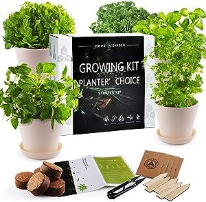 JC-JDFMY11 Herb Garden Starter Kit - DIY Kitchen Window Sill Starter Kit-Easily Grow 5 Kinds of Plants, Basil,Parsley,Cilantro,Mint,Thyme, a Unique Gardening Gift