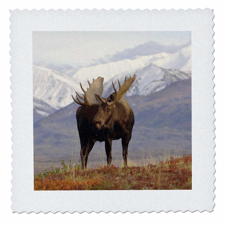 3dRose qs_87701_3 ムースブル野生生生物、デナリ国立公園、アラスカ US02 SKA3065 スティーブカズロスキキルトスクエア、20.32×20.32cm B00B94ISSM