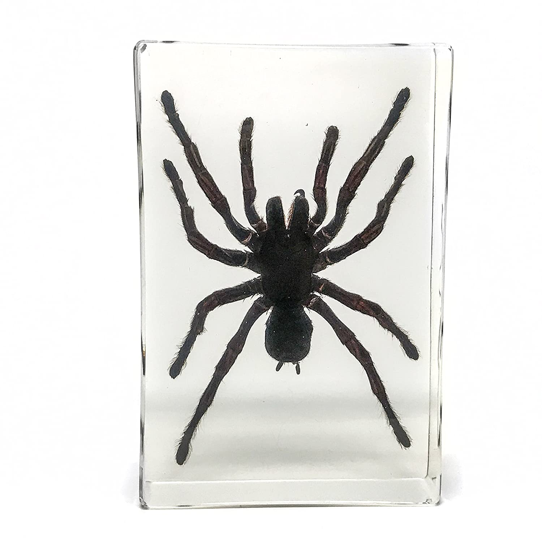 Tarantula Spider in Lucite - 495, 8 Gramm Astro Gallery Of Gems