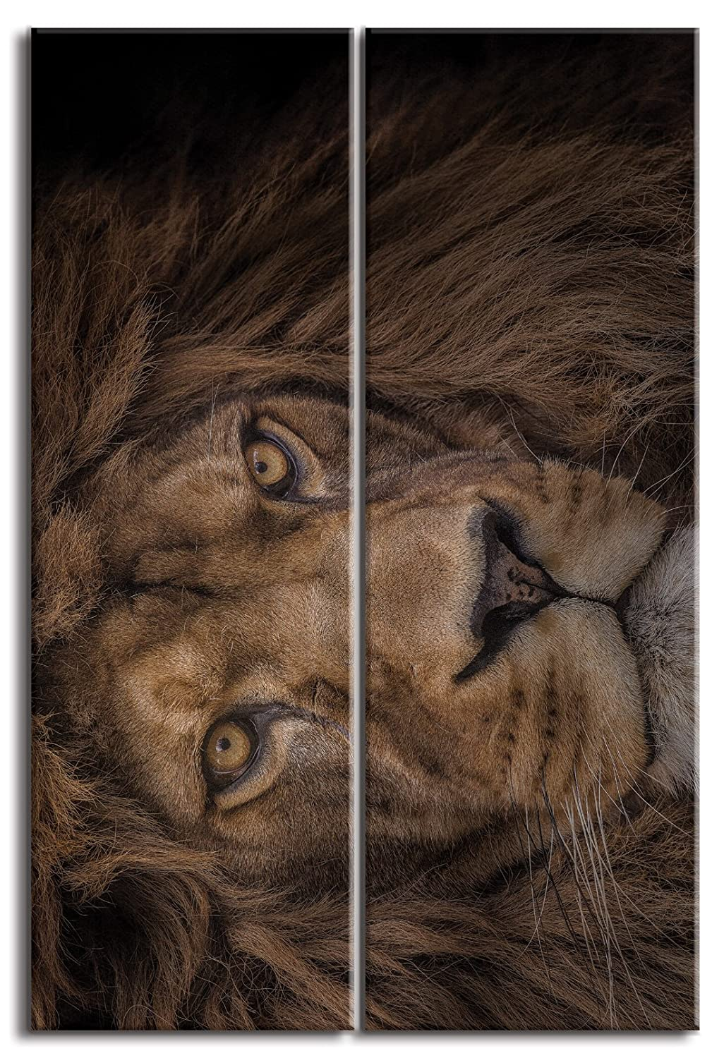 JP London Ready to Hang and Proudly made in North America DMCNV1X375633 Jpl and Ashley Vincent Present Brink of Extinction Lion Head Africa Face 2in Thick 2 Piece Each 12in by 36in Gallery Heavyweight Canvas Wall Art at Overall 3 2 ft