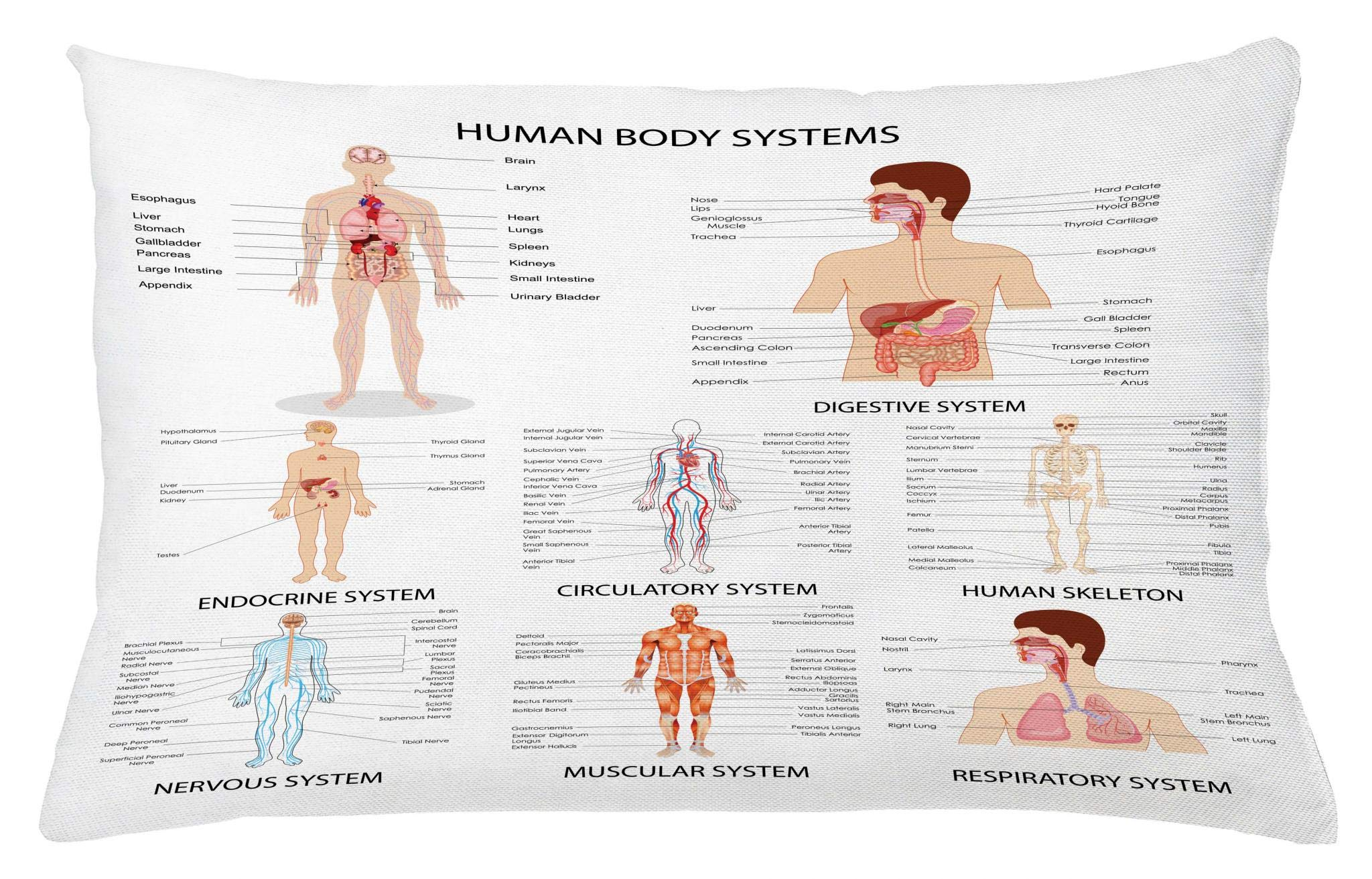 Ambesonne Human Anatomy Throw Pillow Cushion Cover, Complete Chart of Different Organ Body Structures Cell Life Medical Illustration, Decorative Accent Pillow Case, 26 W X 16 L Inches, Multi