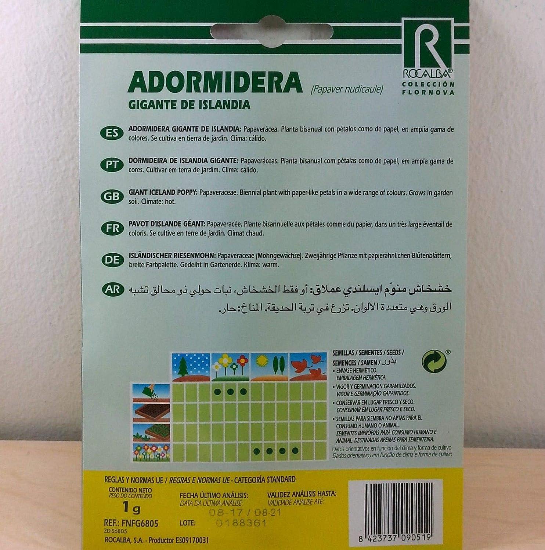 Amazon.com : AGROBITS AdormideraGigantedeIslanda (Papavernudicaule) 1gr5.000semillasamapola : Grocery & Gourmet Food