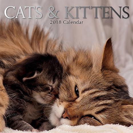 Calendario cuadrado de pared, 16 meses, para 2018, con gatos y gatitos