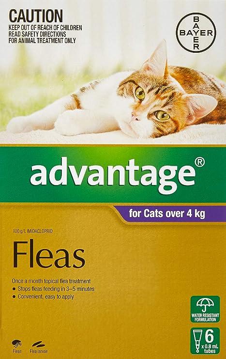 Ventaja 80 mg solución Spot-on para gatos grandes y Pet (más de 4