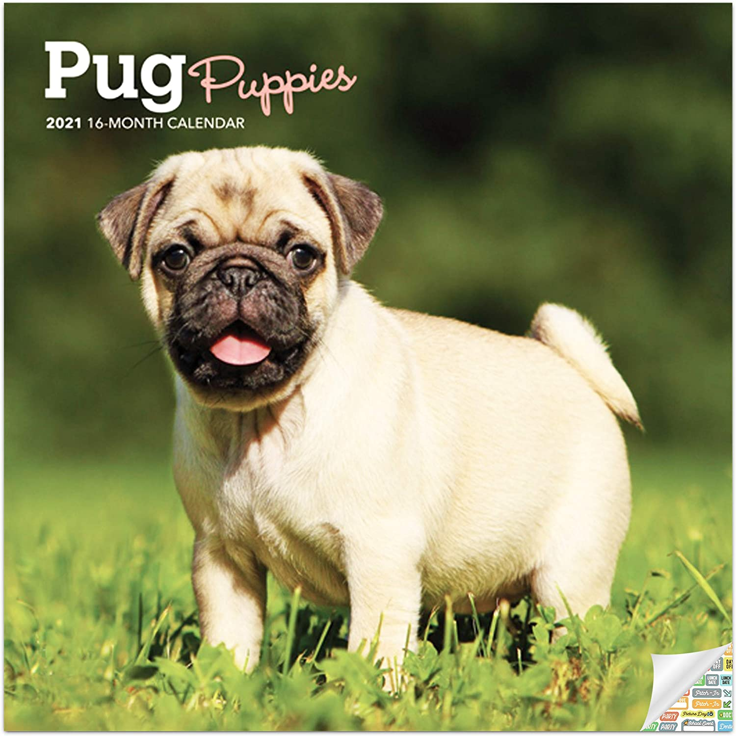 Pug Puppies Calendar 2021 Bundle - Deluxe 2021 Pug Puppies Mini Calendar with Over 100 Calendar Stickers (Puppy Gifts, Office Supplies)