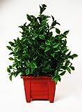 Hyperboles Bonsai Tree in Pot Artificial Flower Plant Office and Home Decor 28cm
