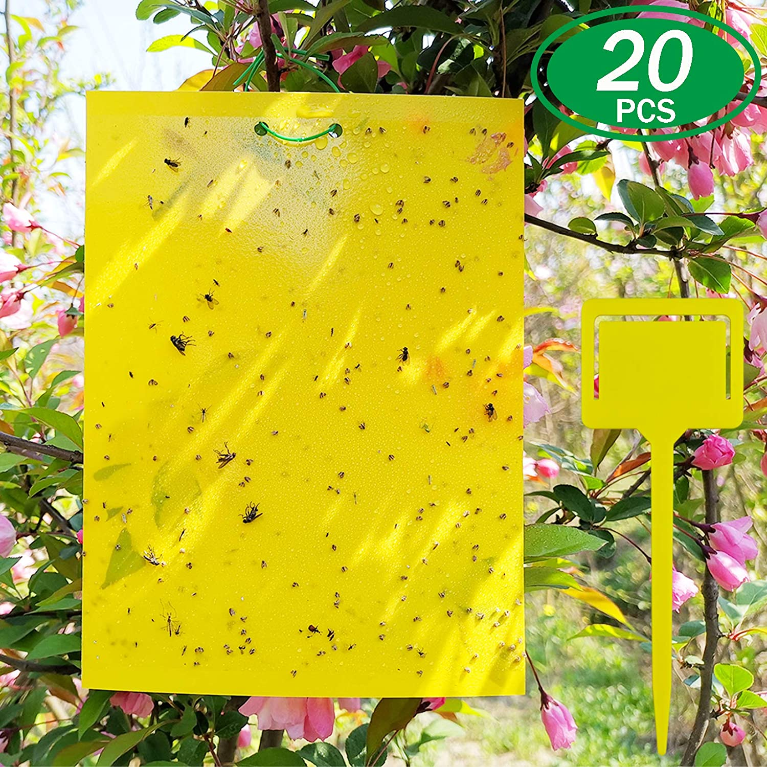 ALIGADO 20 Sheets Yellow Fruit Fly Traps, 8x6 Inches, Plastic Sheet Fly Traps for Mosquitoes, Fungus Gnats, White Flies, Indoor and Outdoor